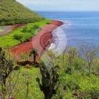 Why-Go-to-the-Galapagos-Islands-Web-Ready-Rabida-Beach-